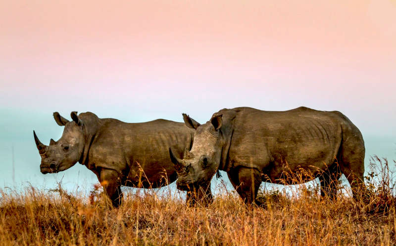 South Africa 12-Day Safari and Culture Tour