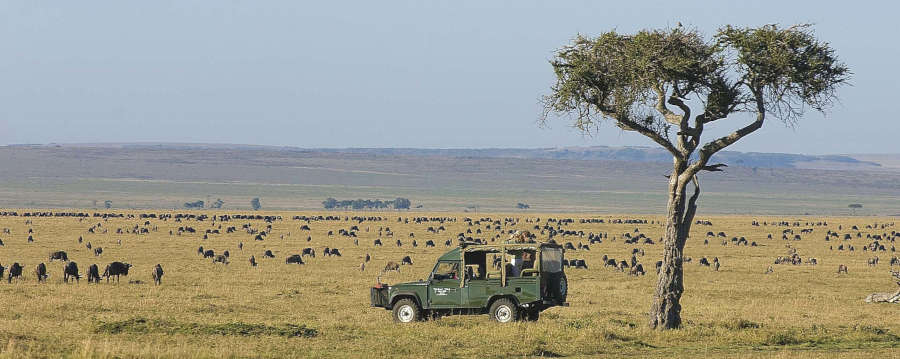 Luxury Game Reserve Safari