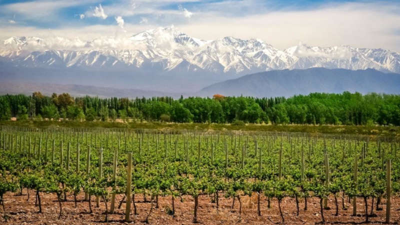 Mendoza 5 Day Wine Tour